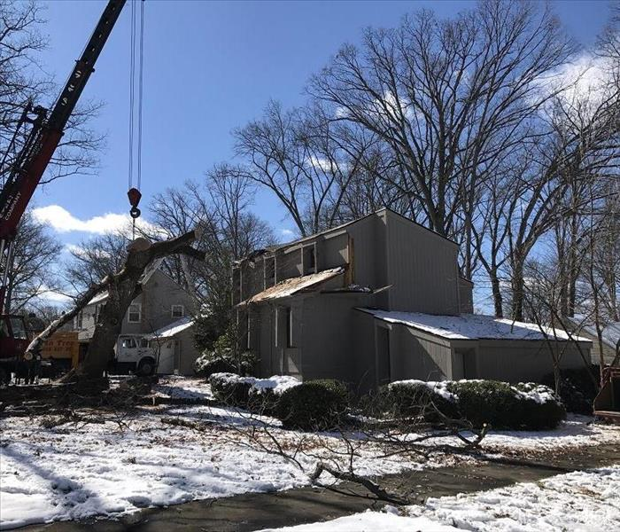 Tree Removal in Youngstown, Ohio