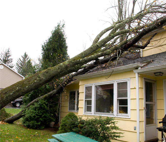 Picture is of a tree that fell on a yellow house