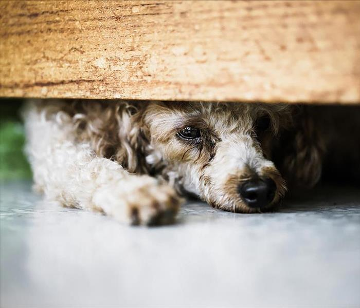 image of a scared dog hiding underneath a bed